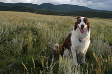 photo of dog in field