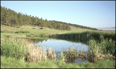 photo of pond and rushes
